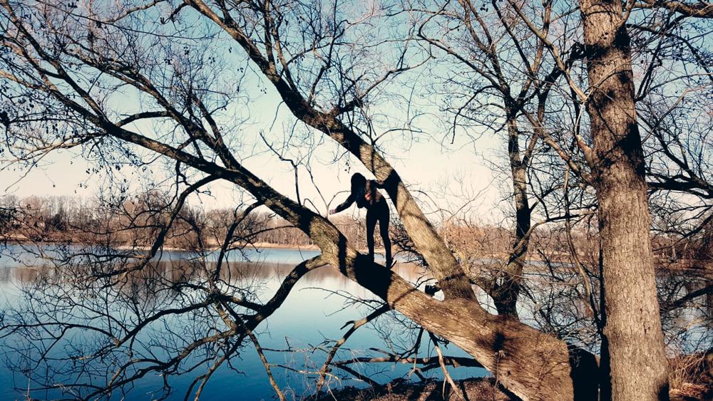 Yoga Fasten Herbst Baum